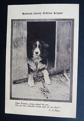 Dog Postcard- National Canine Defence League, Collie, Words F A Petter