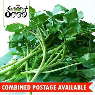 WATERCRESS -  (1200 Seeds) EASY GROW Peppery Flavour HEIRLOOM Bulk