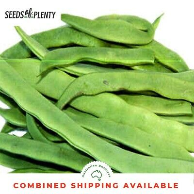 FLAT BEAN - Plazza (50 Seeds) European Favourite Heirloom BULK