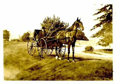 Old b/w photo man in horse and buggy carriage large wheels crop whip