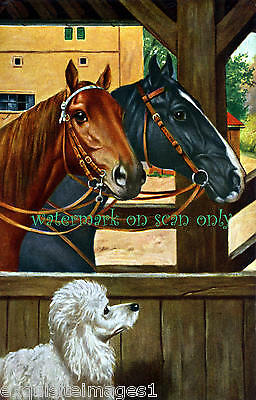 Vintage Color Image~Horses in Stable w White Poodle~ NEW Large Note Cards