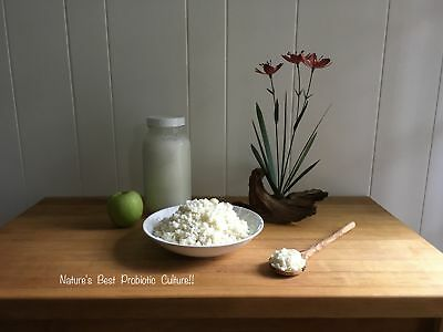 1/4 Cup Organic Live Milk Kefir Grains,Probiotics! Free 1 TBS With Every Order!