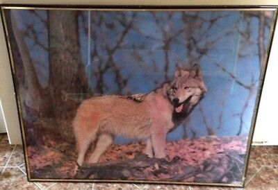 Vintage Timber Wolf poster Angel Gifts USA