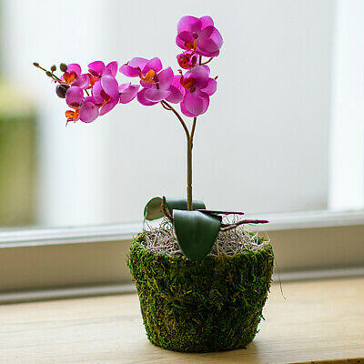 Artificial Pink Phalaenopsis Orchid Plant In Pot Silk Flowers Home & Office Uk