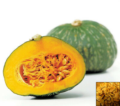 KABOCHA - JAPANESE SQUASH - PUMPKIN SEEDS - 15 SEEDS - delicious vegetable #829