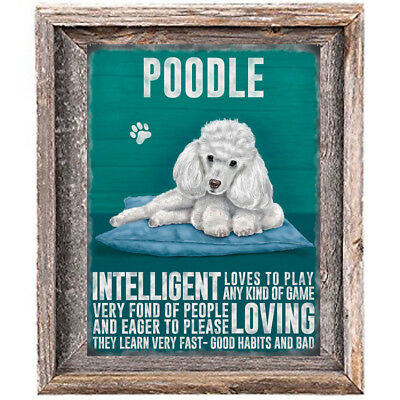 "POODLE DOG character Quote Art Print 8"" x 10"" image modern home wall decor V-3"