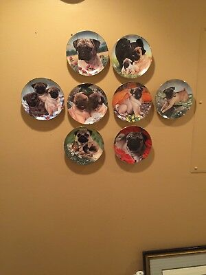 Pug Plates Danbury Set Of 8 PERFECT CONDITION/& Plate hangars