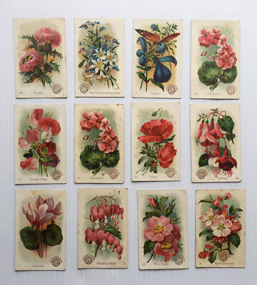 10 Victorian 19th Century Beautiful Flowers Cards from Arm & Hammer Soda Co.