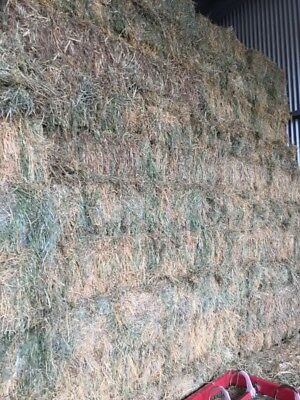 Lucerne & Grass mix small hay bales for Horses Cattle Sheep PICKUP Moss Vale