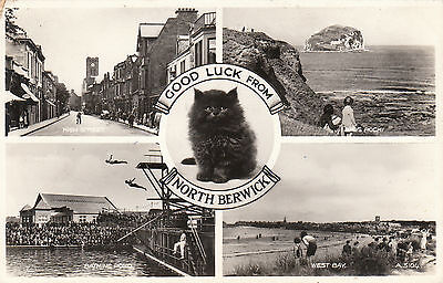 Black Cat Multiview, NORTH BERWICK, East Lothian RP