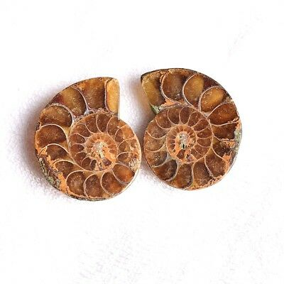 34.65 CT Natural Ammonite Fossil Fancy Perfect 1 Pair 24X20 Loose Gemstone
