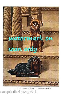 1919 Brussels Griffon Dog & Cavalier King Charles Spaniel Dog~NEW Lge Note Cards