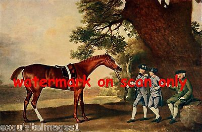 1911~Thoroughbred Horse~Eclipse~NEW Large Note Cards
