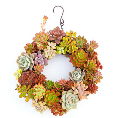 Iron Wire Frame Succulent Pot Hanging Planter Plant Holder Succulents Garland