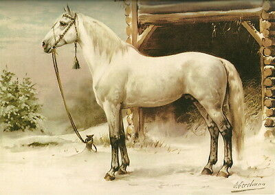 c1900~Regal White Horse Standing in Snow in Front of Barn~ NEW Large Note Cards