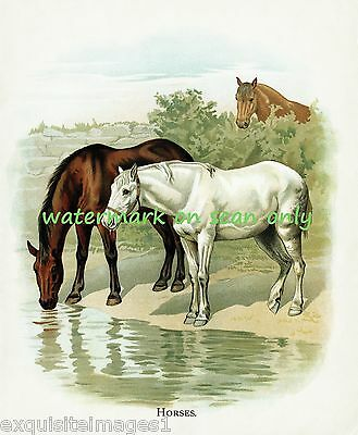 1896 Childrens' Illustration~White,Bay & Chestnut Horses at Water~NEW Note Cards