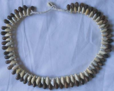 Tribal Papua New Guinea Png Cowrie Shell & Small Brown Shells Collar Necklace