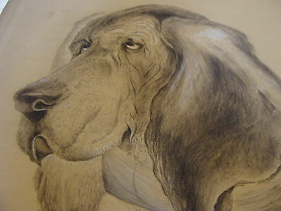 original early artwork: BLOOD HOUND charcoal on paper