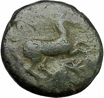 Maroneia in Thrace 400BC Original Ancient Greek Coin Horse Vine Grapes  i48967