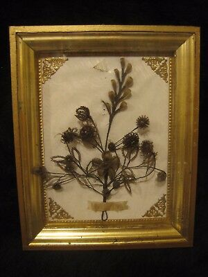 Victorian Mourning Memento Mori Friendship Human Hair Tree - 6 Names mentioned