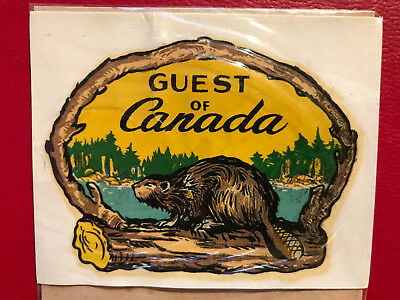 Canada – Guest of Canada Beaver on log in framed branch