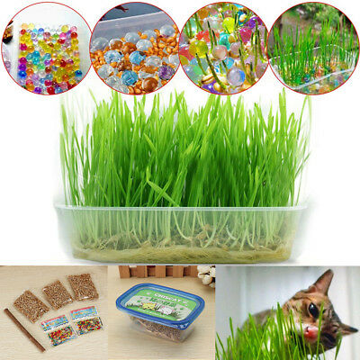 Nutritious Digestive Crystal Cat Grass Healthy Treat Catnip Plant Growing Seeds