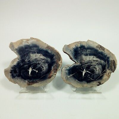 2pcs Amazing POLISHED PETRIFIED WOOD FOSSIL AGATE SLICE DISPLAY Madagascar Y268