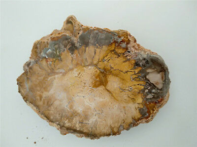 Natural Petrified Wood Fossil Crystal Polished Slice Madagascar