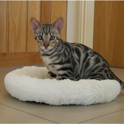 "Rosewood Cream Plush Kitten Sleeper 14"" Kitten Cat Bed"