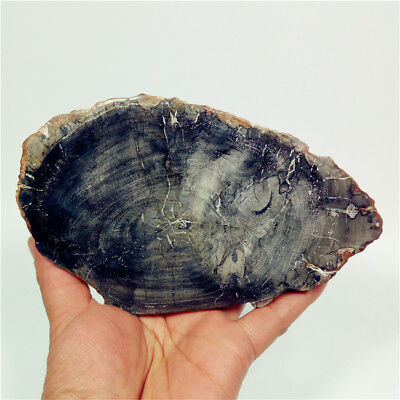 "5.9""380g Natural Black PETRIFIED WOOD  FOSSIL AGATE SLICE DISPLAY MadagascarY290"