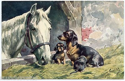 K . FEIERTAG . BKWI . Chiens teckels et cheval . Dachshund dogs and horse