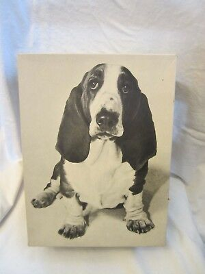 Vintage Wolverine World Wide Hush Puppies Brand Shoes Empty Box Basset Hound