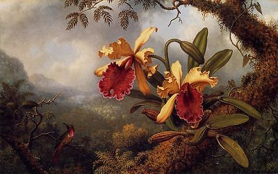 Martin Heade Orchids and Hummingbird Handmade Oil Painting repro