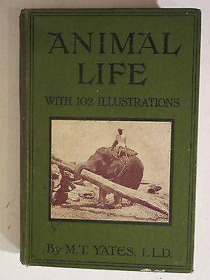 Old 1906 Book Animal Life by M.T.Yates 102 Illustrations Religious Tract Society