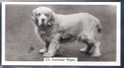 Sinclair-Champion Dogs (1St Series F54)-#20- Clumber Spaniel