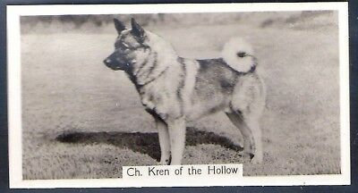 Sinclair-Champion Dogs (1St Series F54)-#39- Elkhound