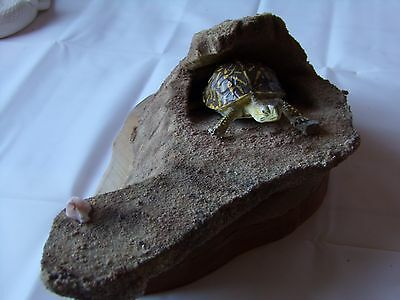 Ornate BoxTurtle Taxidermy Quality Lifesize Reproduction on High End Faux Rock,