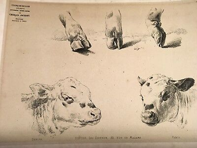 "Antique 19th c. Charcoal Print Study of Cows Bovine Dairy  ""Charles Jacques"""