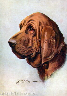 Vintage Art~Beautiful Bloodhound Dog~Dogs~Portrait~NEW Lge Note Cards