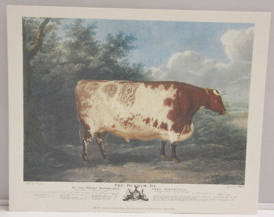 """Cow Durham Ox Field Woods Edge - 8x10"""" Selavy - Printed Italy - NEW A115"""