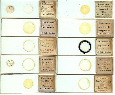 Various spp. Diatoms from Various Locations Microscope Slides by C. L. Peticolas