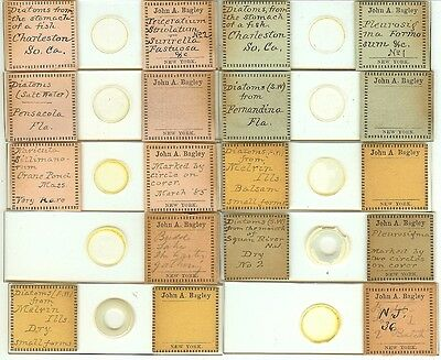 Various spp. Diatoms from Various Locations Microscope Slides by John A. Bagley