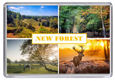 The New Forest National Park Fridge Magnet 01