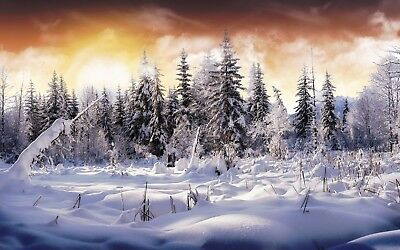 Winter Snow Covered Trees Canvas Picture Poster Print Wall Art Unframed #1229
