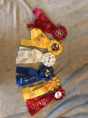 Lot of 6 Horse Show Ribbons. Blue Red Yellow White