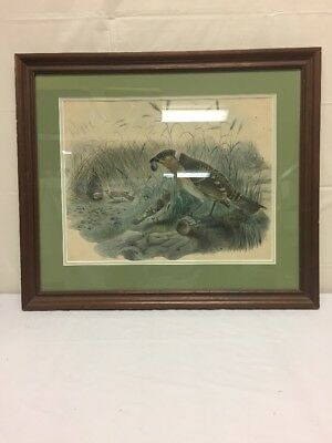 "Vintage Antique Bird Painting 25.5""Wx21.75""H in Frame"