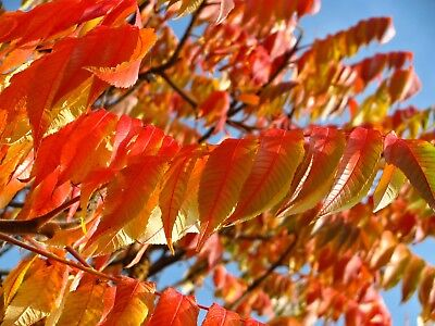 Stunning Autumn Tree Leaves Canvas Picture Poster Print Wall Art Unframed #1900