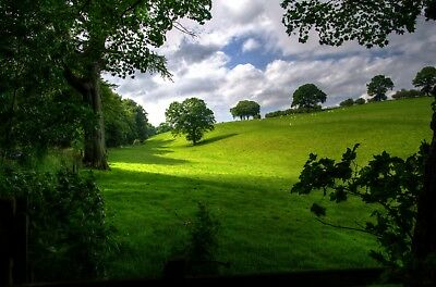 Stunning Countryside Trees Canvas Picture Poster Print Wall Art Unframed #1951