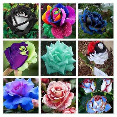 200Pcs Mixed Color Rare Plants Multi-Colors Rose Peony Flower Seeds Home  laps