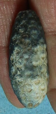 Chalcedony Fossil Horestail Cone – Western Sahara